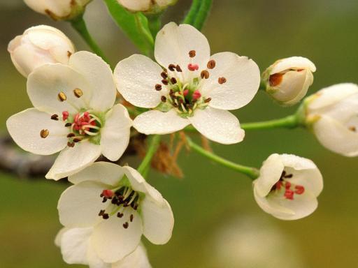 flowers  wallpixel, Beautiful flower